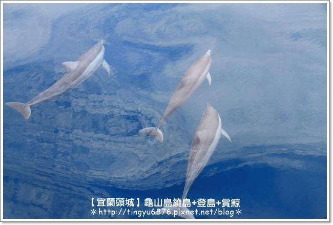 龜山島賞鯨41.JPG