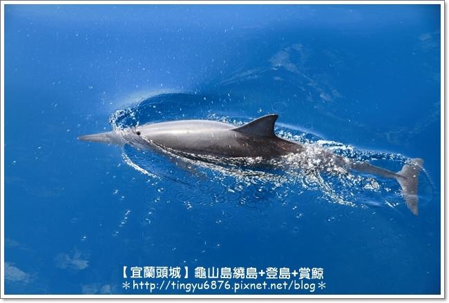 龜山島賞鯨42.JPG