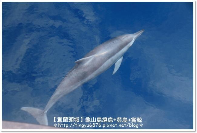 龜山島賞鯨43.JPG