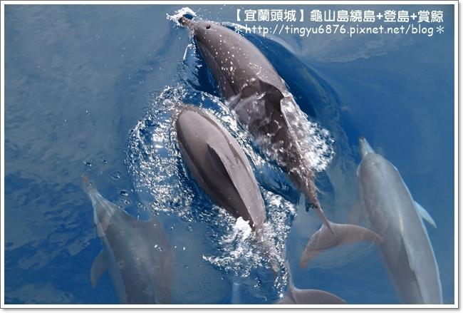 龜山島賞鯨44.JPG