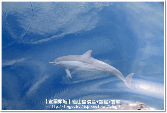 龜山島賞鯨45.JPG