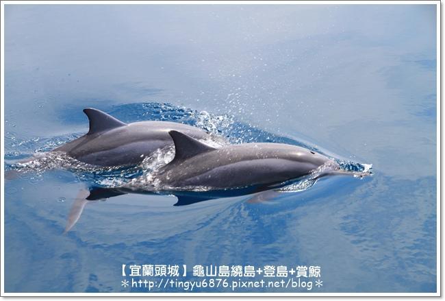 龜山島賞鯨49.JPG