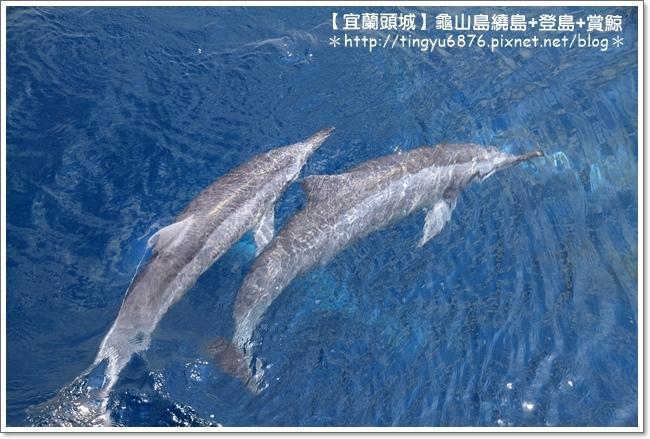 龜山島賞鯨51.JPG