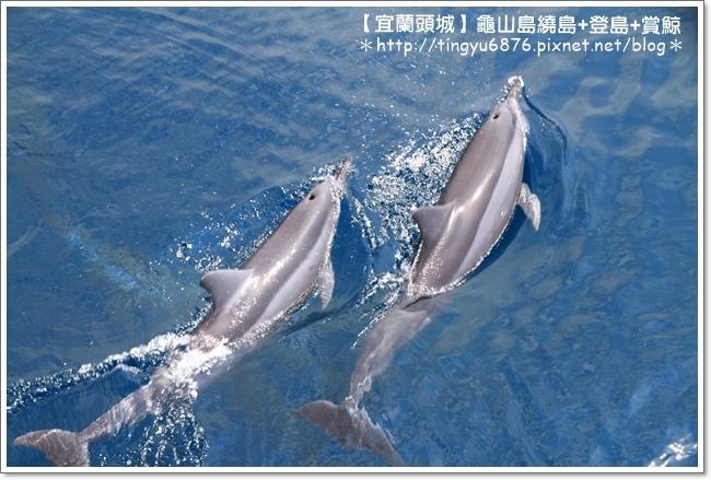 龜山島賞鯨52.JPG
