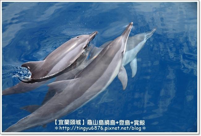龜山島賞鯨54.JPG