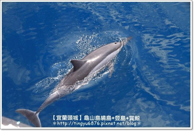 龜山島賞鯨55.JPG