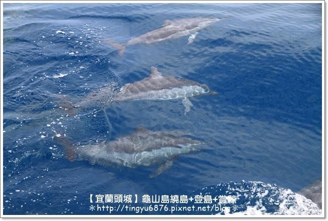 龜山島賞鯨57.JPG
