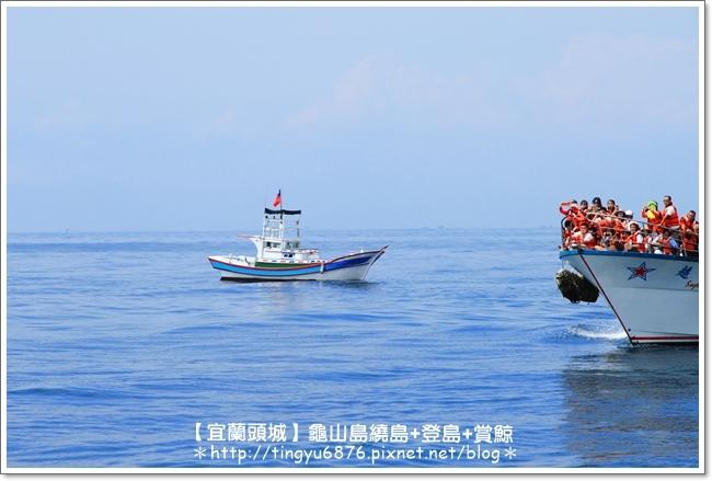 龜山島賞鯨59.JPG