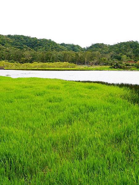 東源湖+旭海2.JPG