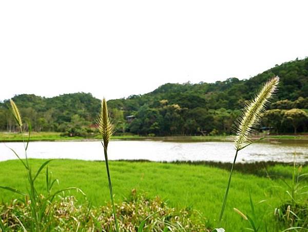 東源湖+旭海16.JPG
