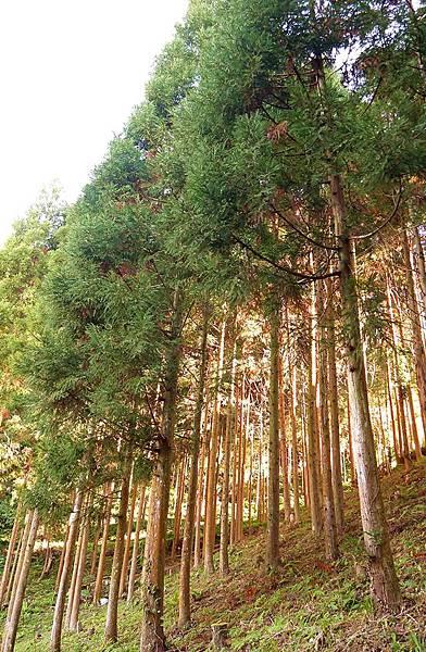 香杉露營19.JPG