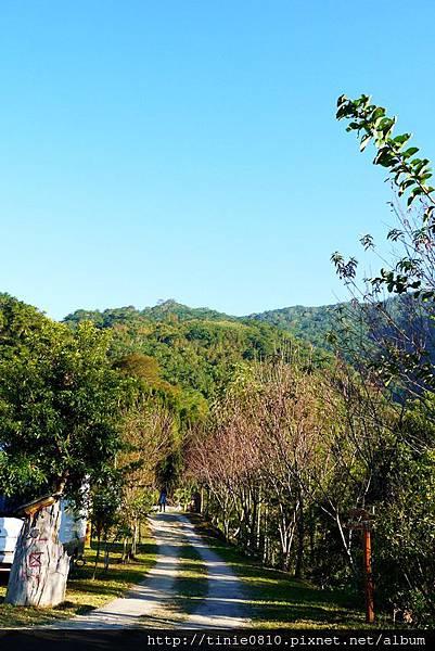 香杉露營14.JPG