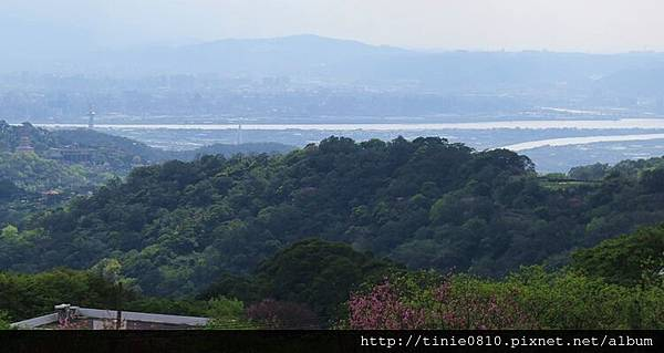 陽明山櫻花42.JPG
