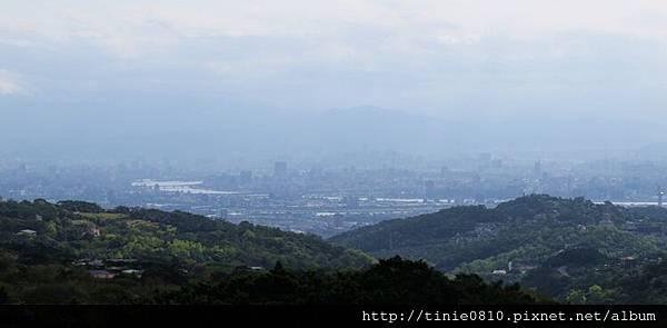 陽明山櫻花43.JPG