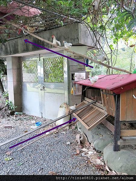 盛德農場露營51.JPG