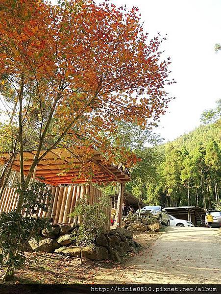 谷燕鱒魚露營25.JPG