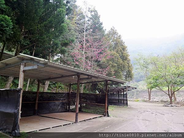 仙湖露營 5.JPG