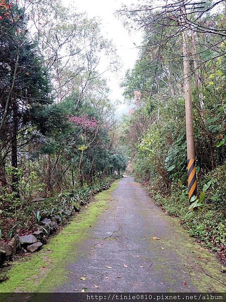 仙湖露營 38.JPG