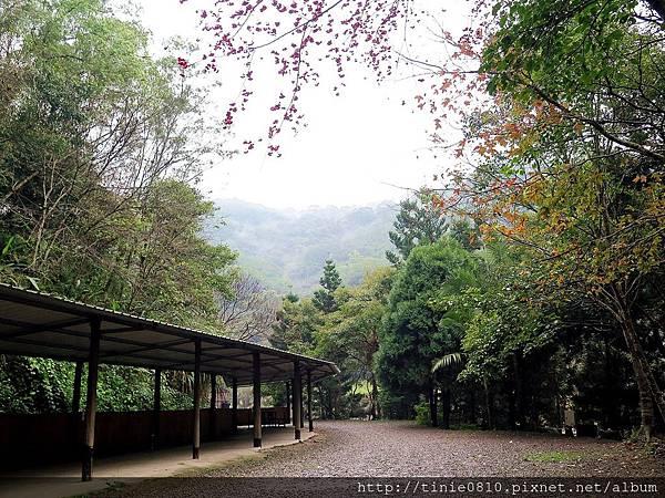 仙湖露營 44.JPG