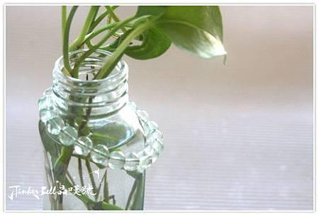 馬達加斯加翡翠綠幽靈,套在養著黃金葛的瓶子上。