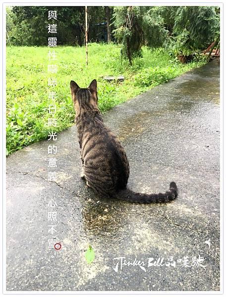 與這靈性貓咪半日時光的意義,心照不宣。.jpg