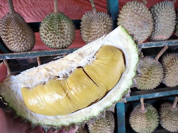 馬來西亞,榴槤,雪蘭莪,貓山王,竹腳