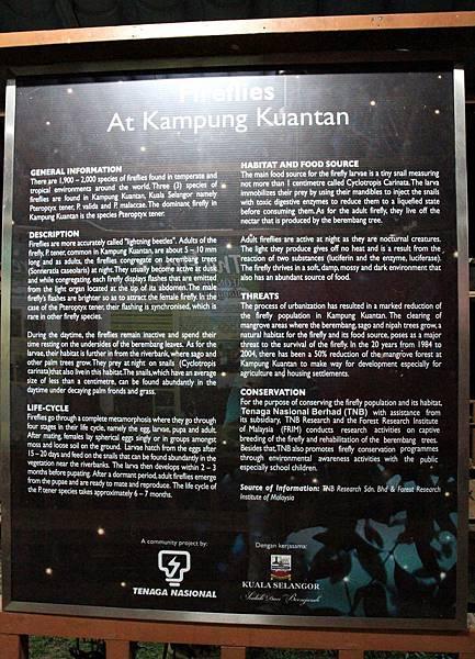 Kampung Kuantan Firefly Park,瓜拉雪蘭莪螢火蟲,世界八大奇觀之一,