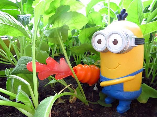URBAN FARMER城市小農,蔬菜, 貓草, 香草,櫻桃蘿蔔