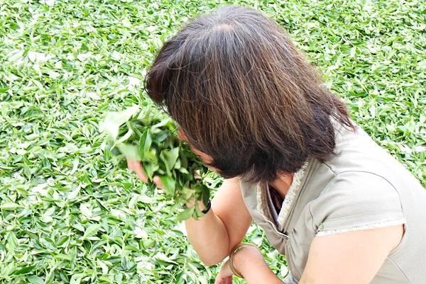 明心園、阿里山明心園馥津製茶廠、製茶過程、台灣高山茶、台灣阿龍茶、阿里山茶園、正宗阿里山茶、明心園禪靜渡假茶莊、