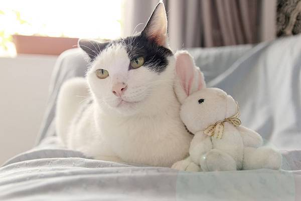 瑞比特設計工作室、人像攝影、商業攝影、網拍攝影、寵物攝影、名片設計、DM設計、海報設計、網拍賣場整體規劃設計、寵物、貓貓拍照、可愛貓貓、可愛寵物