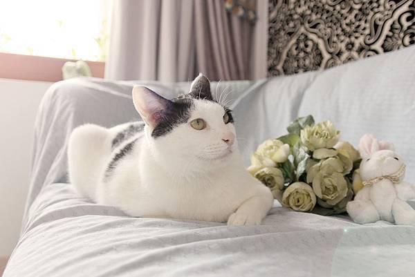 瑞比特設計工作室、人像攝影、商業攝影、網拍攝影、寵物攝影、名片設計、DM設計、海報設計、網拍賣場整體規劃設計、寵物、貓貓拍照、可愛貓貓、可愛寵物瑞比特設計工作室、人像攝影、商業攝影、網拍攝影、寵物攝影、名片設計、DM設計、海報設計、網拍賣場整體規劃設計、寵物、貓貓拍照、可愛貓貓、可愛寵物