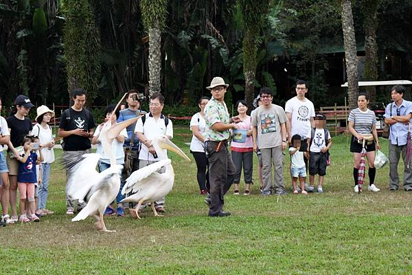 綠世界生態農場、新竹綠世界、草泥馬、生態導覽、芬多精