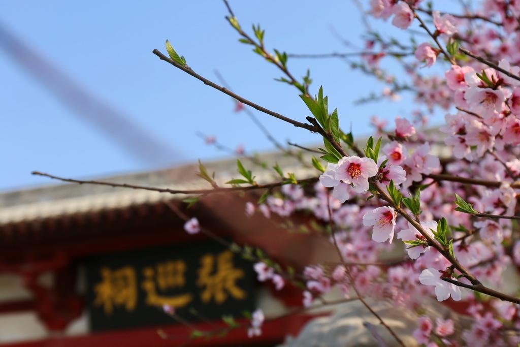 豫來豫Happy、豫來豫好快樂中原行、豫見河南、中國河南、商丘古城
