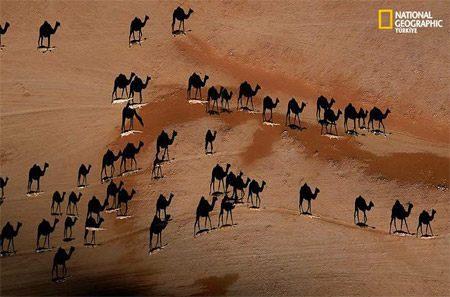 駱駝影子.jpg