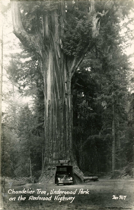 Chandelier_Tree_Underwood_Park_CA_PC003.jpg