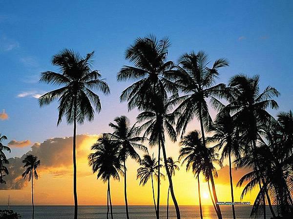 Palm_Paradise_St_Lucia.jpg