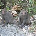 超酷,在柴山看到一堆猴子呢..