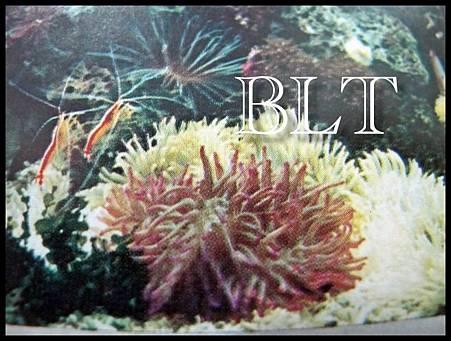 清潔蝦/海葵