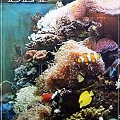 珊瑚缸.JPG