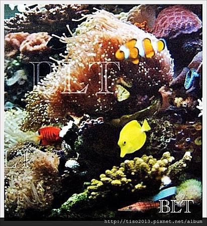 珊瑚缸a.JPG