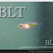 魚苗2.jpg