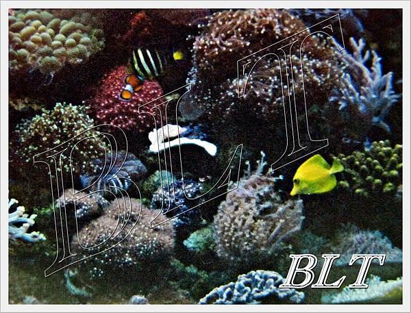 珊瑚缸1.JPG