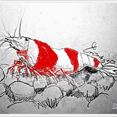水晶蝦.png