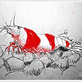 水晶蝦1.png