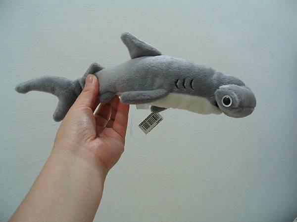 戰利品--Hammer head shark