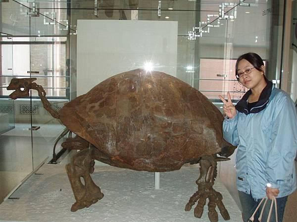 DAY 8-自然歷史博物館-海龜骨頭