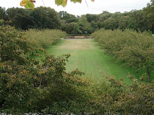 DAY 12-布魯克林植物園