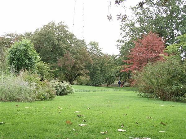 DAY 12-布魯克林植物園-粉美的樹