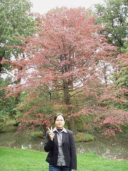 DAY 12-布魯克林植物園-我超愛這棵的