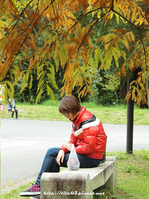 """1001126_奧萬大""""沒楓""""之旅"""